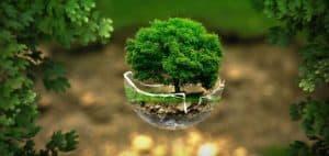 Environment green tree in eggshell